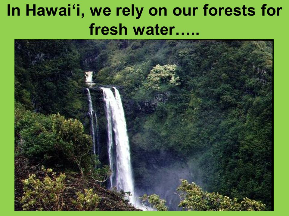 In Hawai'i, we rely on our forests for fresh water…..