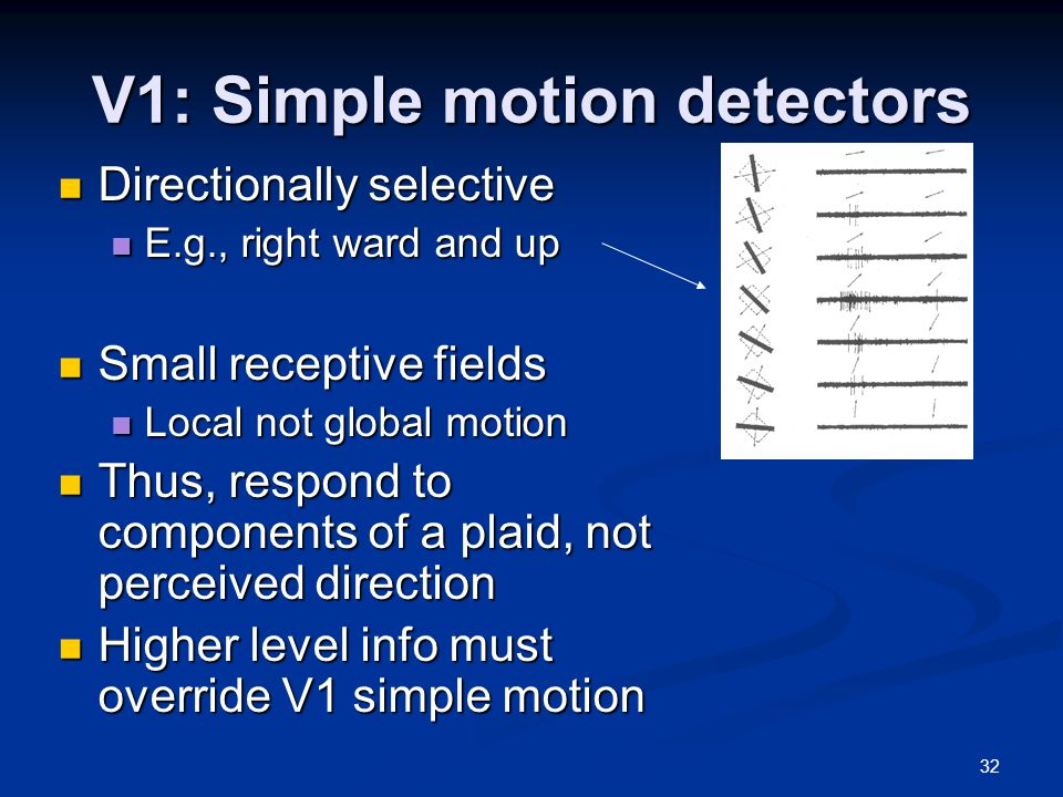 32 V1: Simple motion detectors Directionally selective Directionally selective E.g., right ward and up E.g., right ward and up Small receptive fields Small receptive fields Local not global motion Local not global motion Thus, respond to components of a plaid, not perceived direction Thus, respond to components of a plaid, not perceived direction Higher level info must override V1 simple motion Higher level info must override V1 simple motion