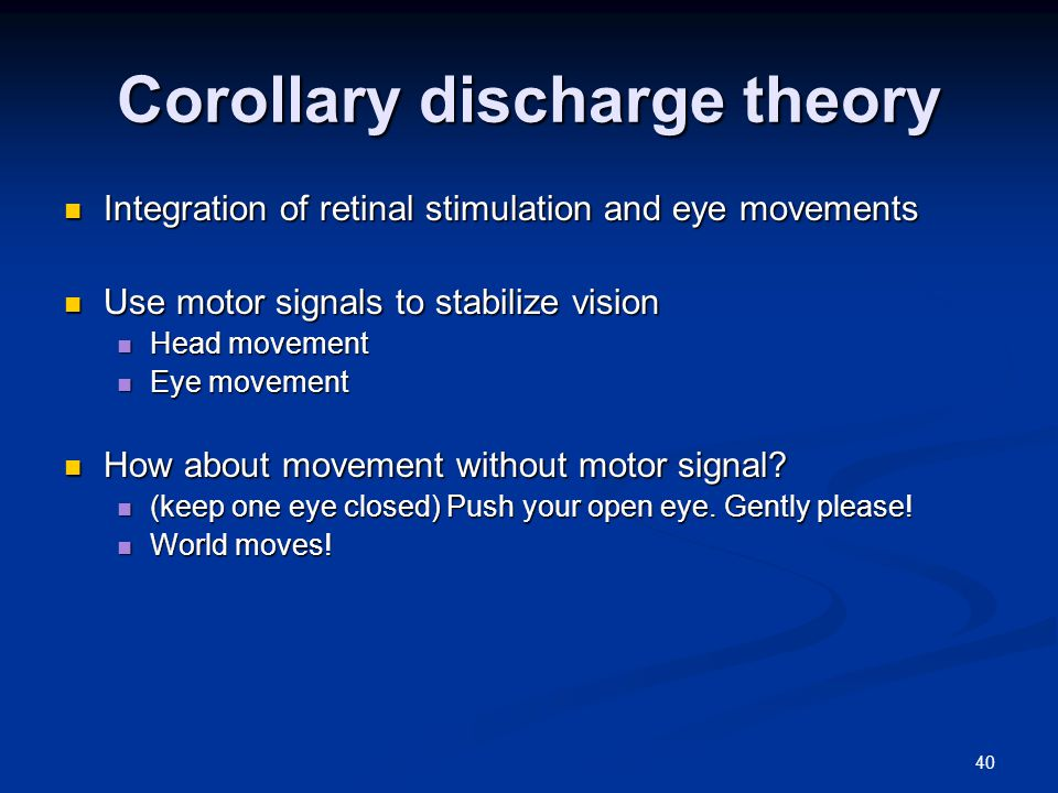 40 Corollary discharge theory Integration of retinal stimulation and eye movements Integration of retinal stimulation and eye movements Use motor signals to stabilize vision Use motor signals to stabilize vision Head movement Head movement Eye movement Eye movement How about movement without motor signal.