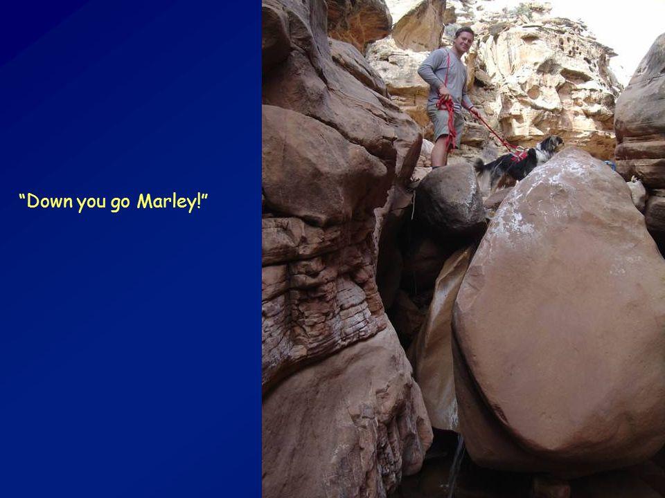 """Down you go Marley!"""