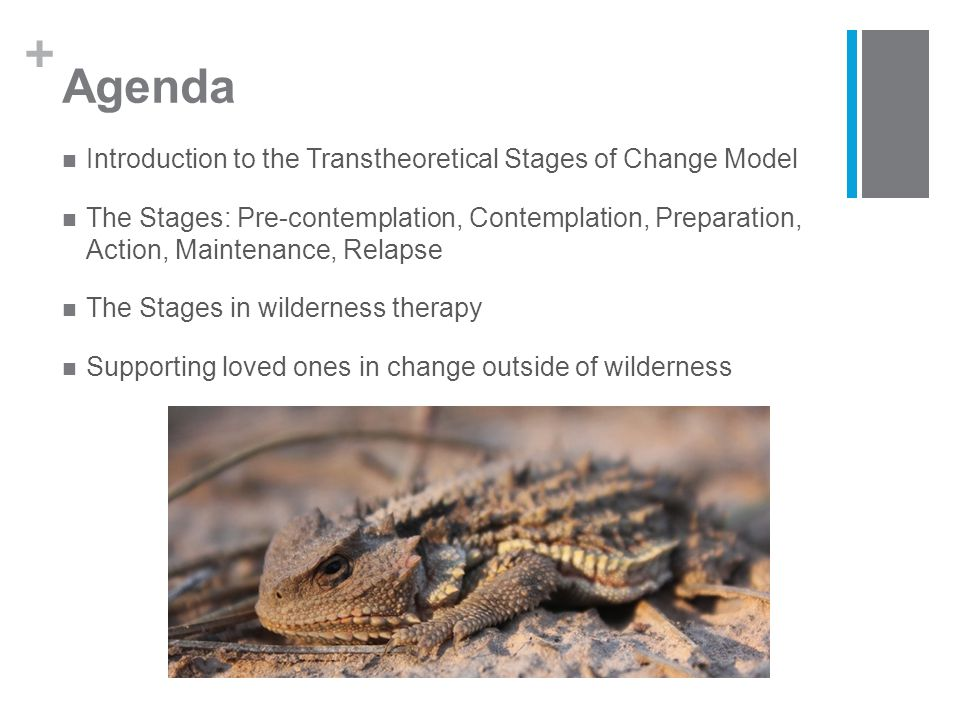 + Agenda Introduction to the Transtheoretical Stages of Change Model The Stages: Pre-contemplation, Contemplation, Preparation, Action, Maintenance, Relapse The Stages in wilderness therapy Supporting loved ones in change outside of wilderness