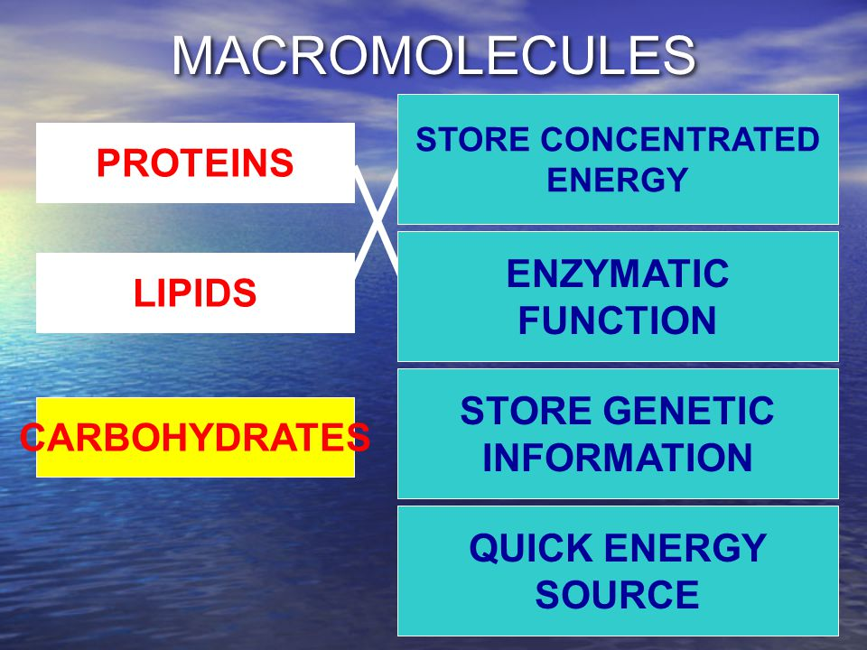 MACROMOLECULES STORE CONCENTRATED ENERGY QUICK ENERGY SOURCE STORE GENETIC INFORMATION ENZYMATIC FUNCTION PROTEINS LIPIDS CARBOHYDRATES