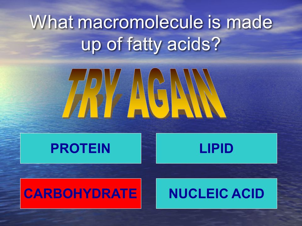 What macromolecule is made up of fatty acids PROTEIN NUCLEIC ACIDCARBOHYDRATE LIPID