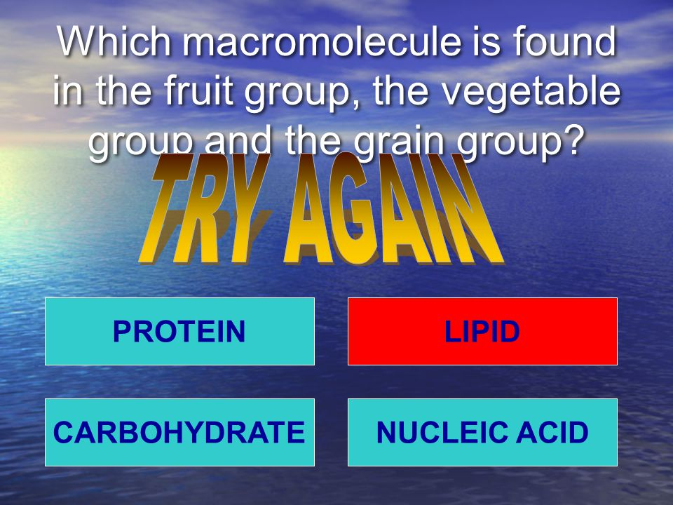 Which macromolecule is found in the fruit group, the vegetable group and the grain group? PROTEIN NUCLEIC ACIDCARBOHYDRATE LIPID