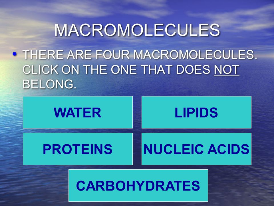 MACROMOLECULES THERE ARE FOUR MACROMOLECULES. CLICK ON THE ONE THAT DOES NOT BELONG.