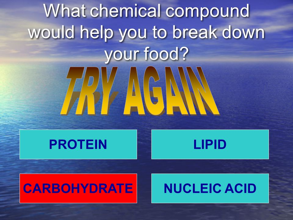 What chemical compound would help you to break down your food.
