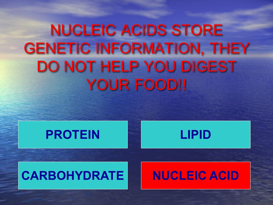 NUCLEIC ACIDS STORE GENETIC INFORMATION, THEY DO NOT HELP YOU DIGEST YOUR FOOD!.