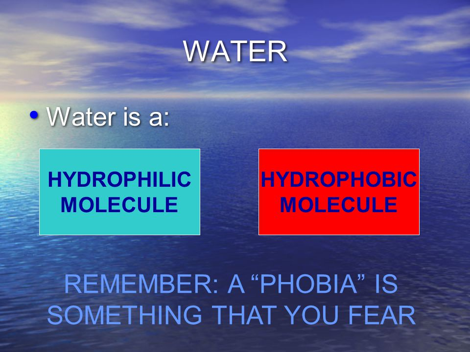 WATER Water is a: HYDROPHILIC MOLECULE HYDROPHOBIC MOLECULE REMEMBER: A PHOBIA IS SOMETHING THAT YOU FEAR