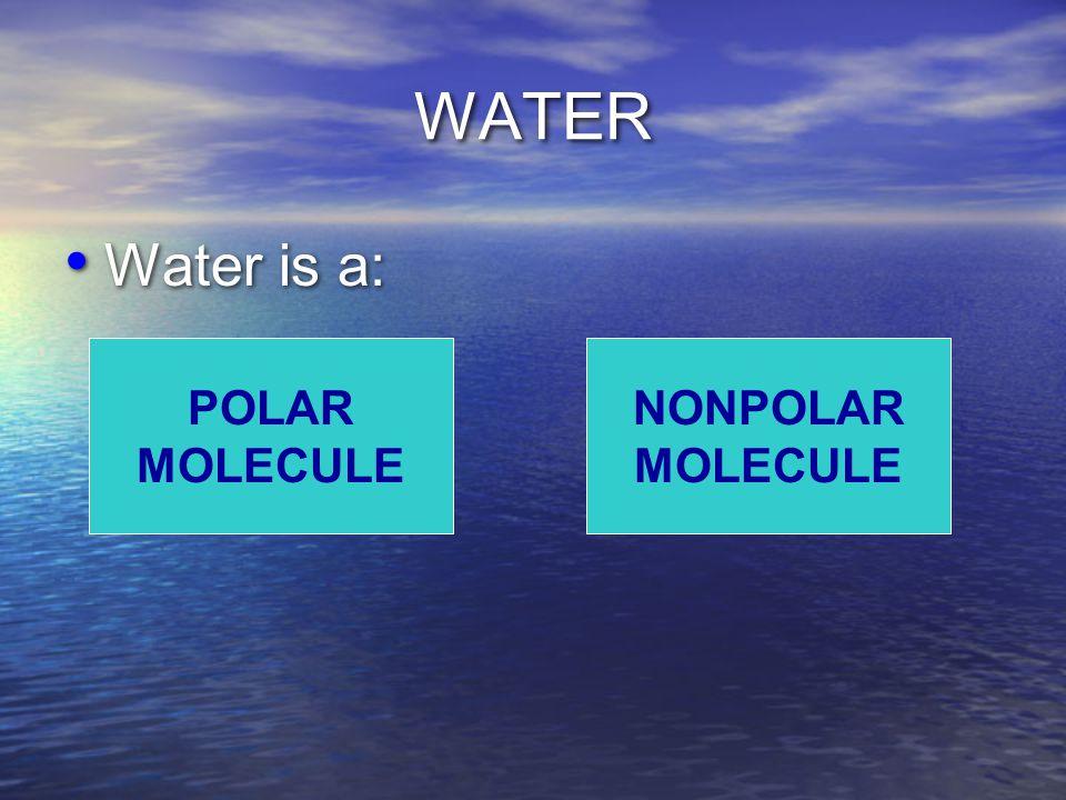 WATER Water is a: POLAR MOLECULE NONPOLAR MOLECULE