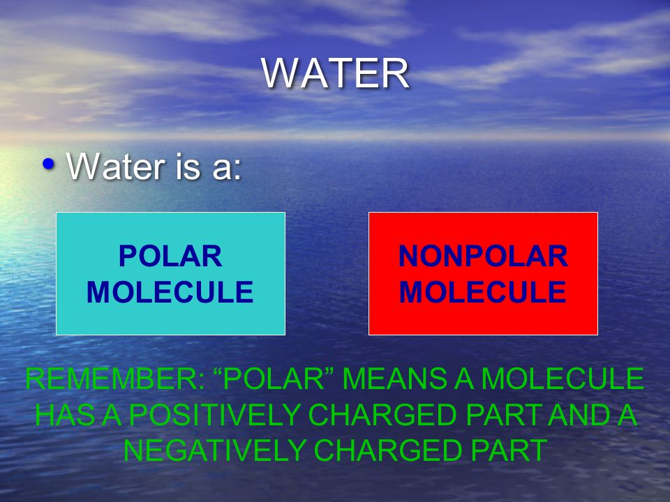 WATER Water is a: POLAR MOLECULE NONPOLAR MOLECULE REMEMBER: POLAR MEANS A MOLECULE HAS A POSITIVELY CHARGED PART AND A NEGATIVELY CHARGED PART