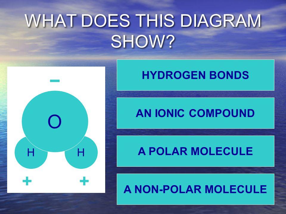 WHAT DOES THIS DIAGRAM SHOW? HH O ++ A NON-POLAR MOLECULE HYDROGEN BONDS AN IONIC COMPOUND A POLAR MOLECULE