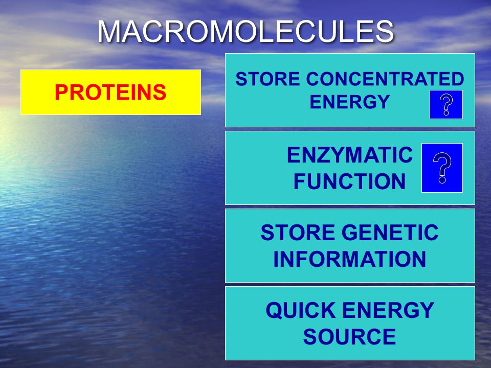 MACROMOLECULES STORE CONCENTRATED ENERGY QUICK ENERGY SOURCE STORE GENETIC INFORMATION ENZYMATIC FUNCTION PROTEINS