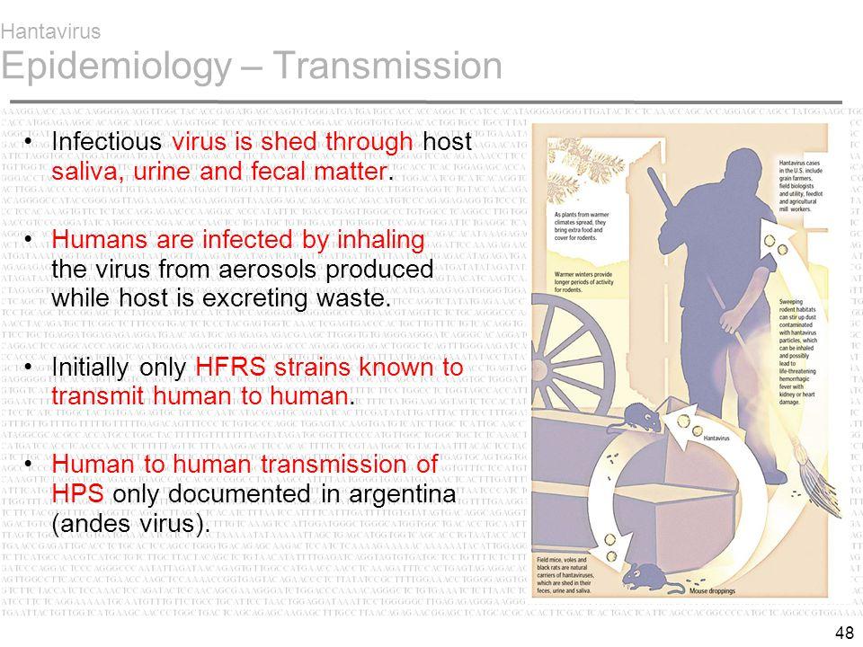 48 Hantavirus Epidemiology – Transmission Infectious virus is shed through host saliva, urine and fecal matter.