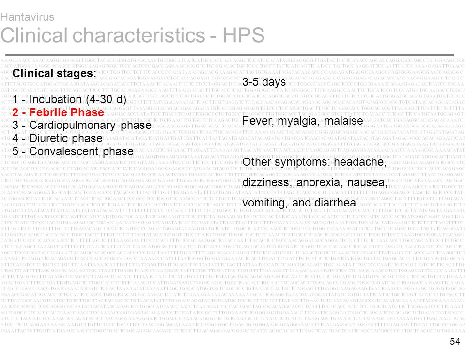 54 Hantavirus Clinical characteristics - HPS Clinical stages: 1 - Incubation (4-30 d) 2 - Febrile Phase  3 - Cardiopulmonary phase 4 - Diuretic phase 5 - Convalescent phase 3-5 days Fever, myalgia, malaise Other symptoms: headache, dizziness, anorexia, nausea, vomiting, and diarrhea.