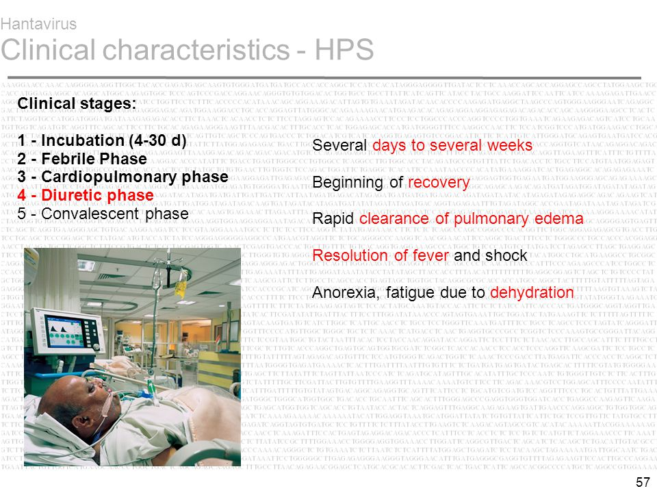 57 Hantavirus Clinical characteristics - HPS Clinical stages: 1 - Incubation (4-30 d) 2 - Febrile Phase  3 - Cardiopulmonary phase 4 - Diuretic phase 5 - Convalescent phase Several days to several weeks Beginning of recovery Rapid clearance of pulmonary edema Resolution of fever and shock Anorexia, fatigue due to dehydration