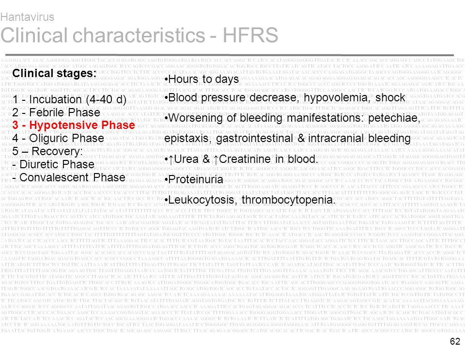 62 Hantavirus Clinical characteristics - HFRS Hours to days Blood pressure decrease, hypovolemia, shock Worsening of bleeding manifestations: petechiae, epistaxis, gastrointestinal & intracranial bleeding ↑Urea & ↑Creatinine in blood.