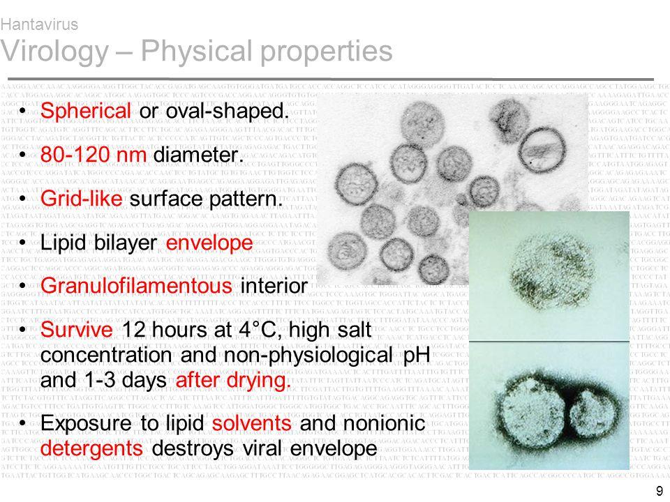 9 Hantavirus Virology – Physical properties Spherical or oval-shaped.