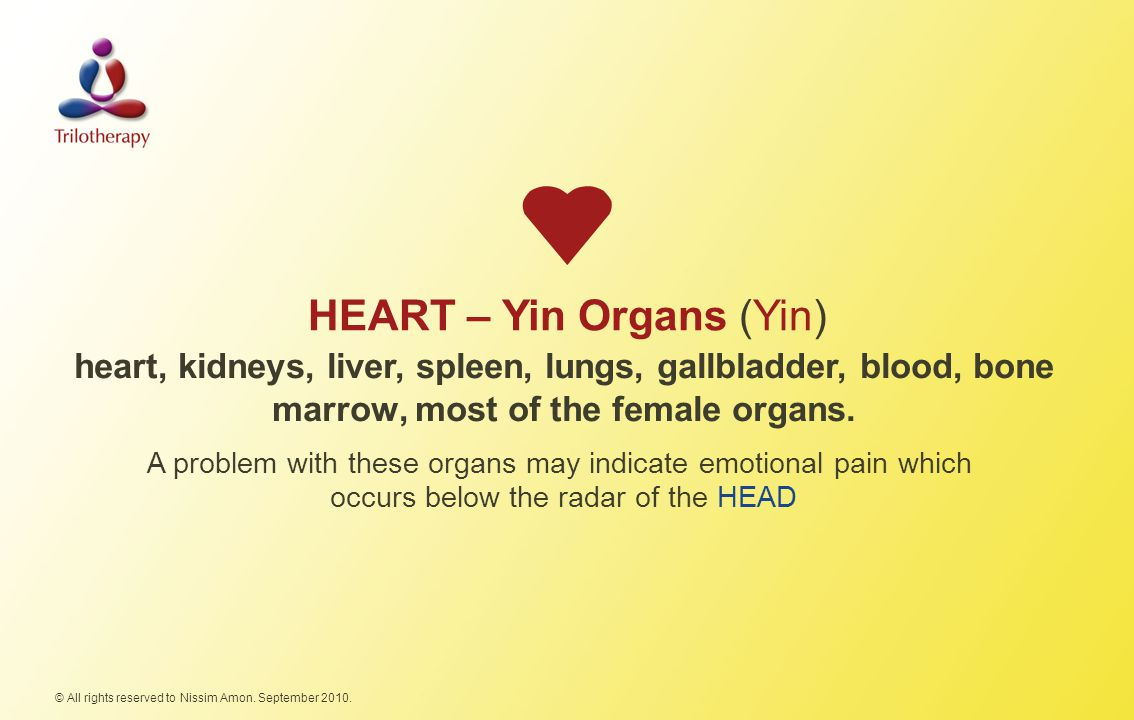 HEART – Yin Organs (Yin) © All rights reserved to Nissim Amon.