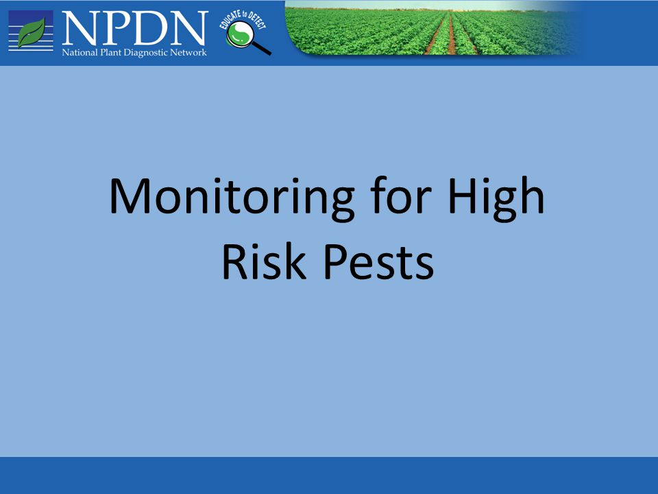 Monitoring for High Risk Pests