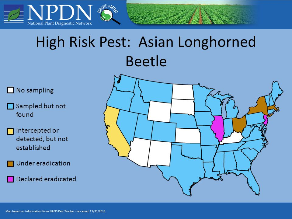 High Risk Pest: Asian Longhorned Beetle No sampling Sampled but not found Intercepted or detected, but not established Under eradication Declared eradicated Map based on information from NAPIS Pest Tracker – accessed 12/31/2013.