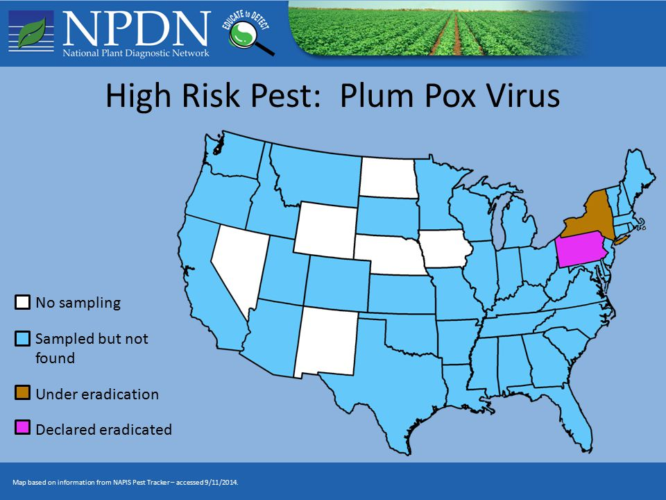 High Risk Pest: Plum Pox Virus No sampling Sampled but not found Under eradication Declared eradicated Map based on information from NAPIS Pest Tracker – accessed 9/11/2014.