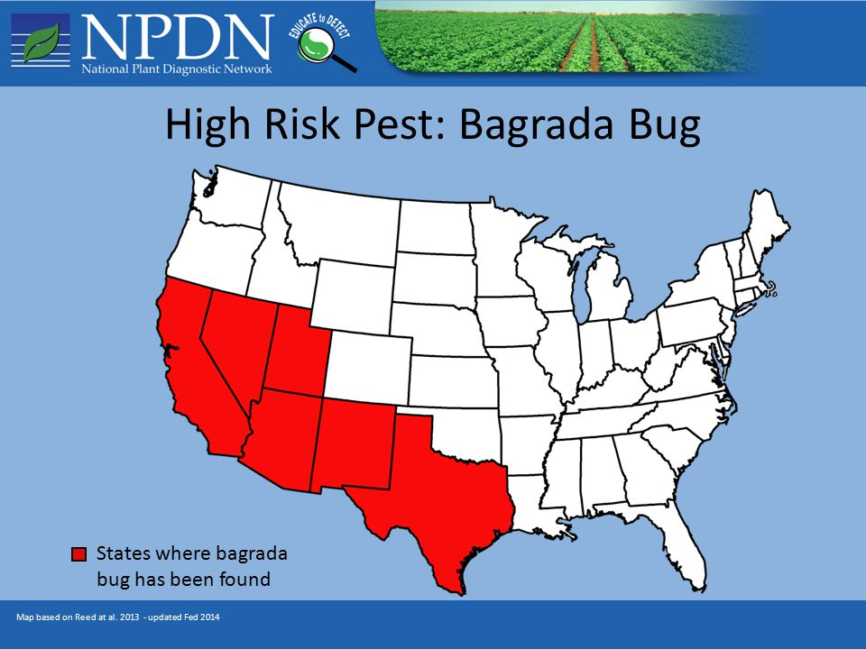 High Risk Pest: Bagrada Bug Map based on Reed at al.