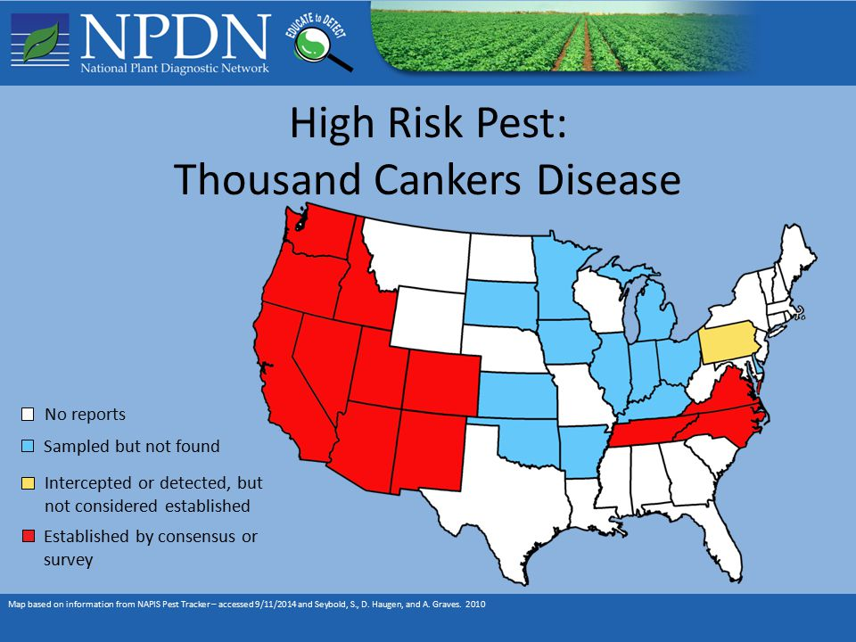 High Risk Pest: Thousand Cankers Disease Map based on information from NAPIS Pest Tracker – accessed 9/11/2014 and Seybold, S., D.