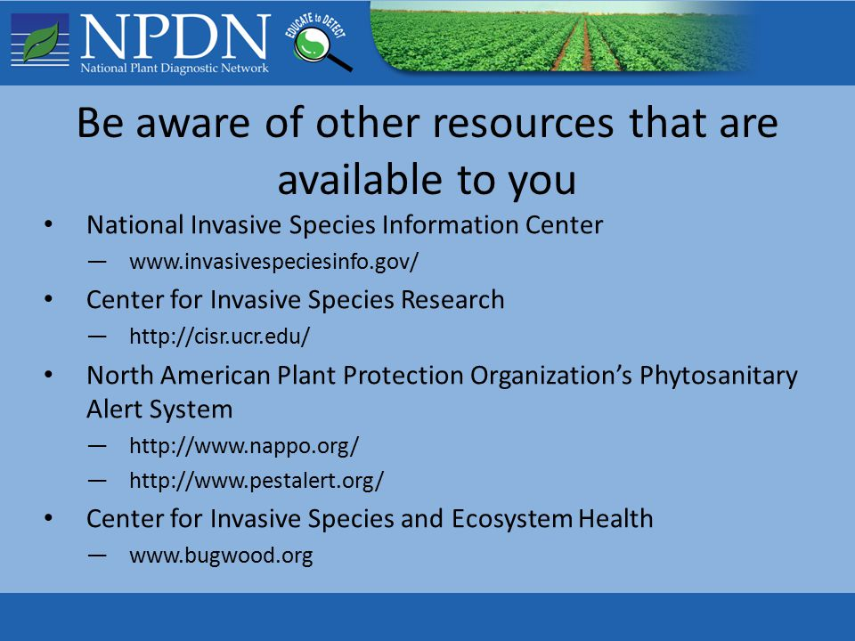 Be aware of other resources that are available to you National Invasive Species Information Center —www.invasivespeciesinfo.gov/ Center for Invasive Species Research —http://cisr.ucr.edu/ North American Plant Protection Organization's Phytosanitary Alert System —http://www.nappo.org/ —http://www.pestalert.org/ Center for Invasive Species and Ecosystem Health —www.bugwood.org