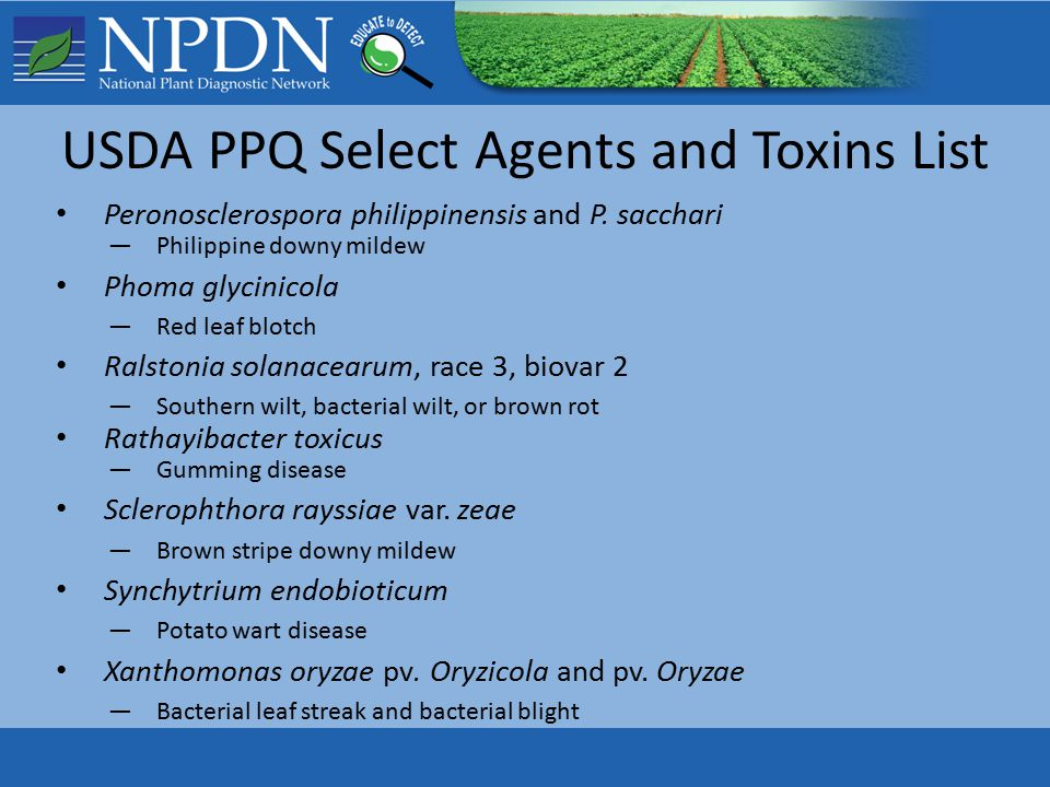 USDA PPQ Select Agents and Toxins List Peronosclerospora philippinensis and P.