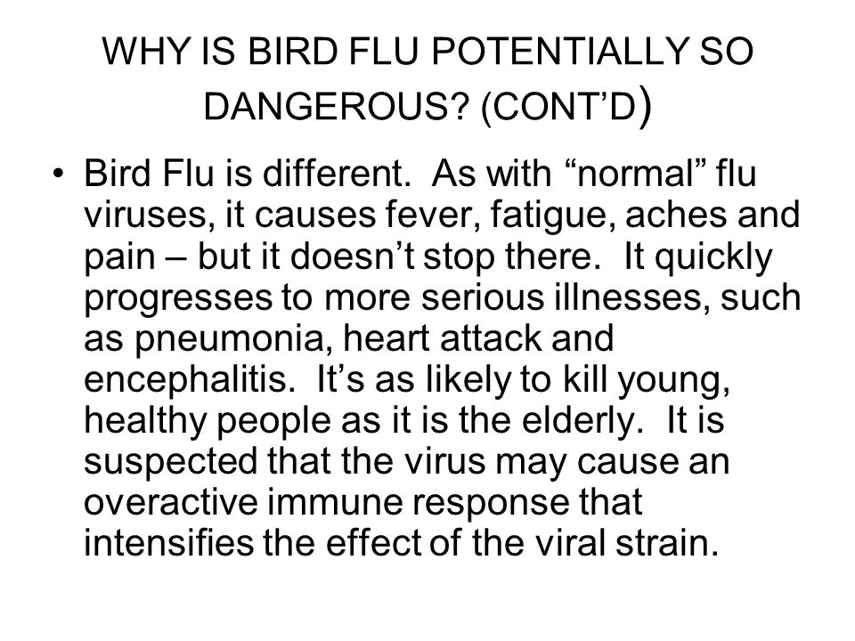 """WHY IS BIRD FLU POTENTIALLY SO DANGEROUS? (CONT'D ) Bird Flu is different. As with """"normal"""" flu viruses, it causes fever, fatigue, aches and pain – bu"""