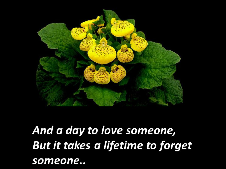It takes only a minute to develop a crush on someone, An hour to like someone,