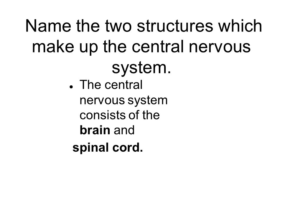 ● The central nervous system consists of the brain and spinal cord.