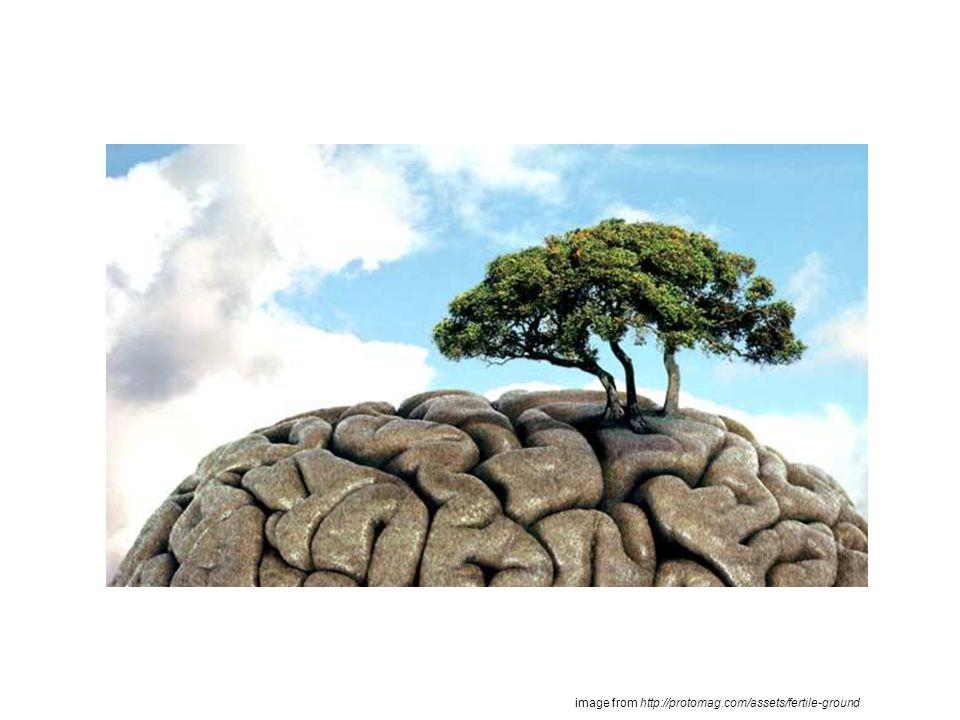 brain Spinal Cord Cerebellum Cerebrum Medulla Oblongata Consists of: Brain and Spinal Cord