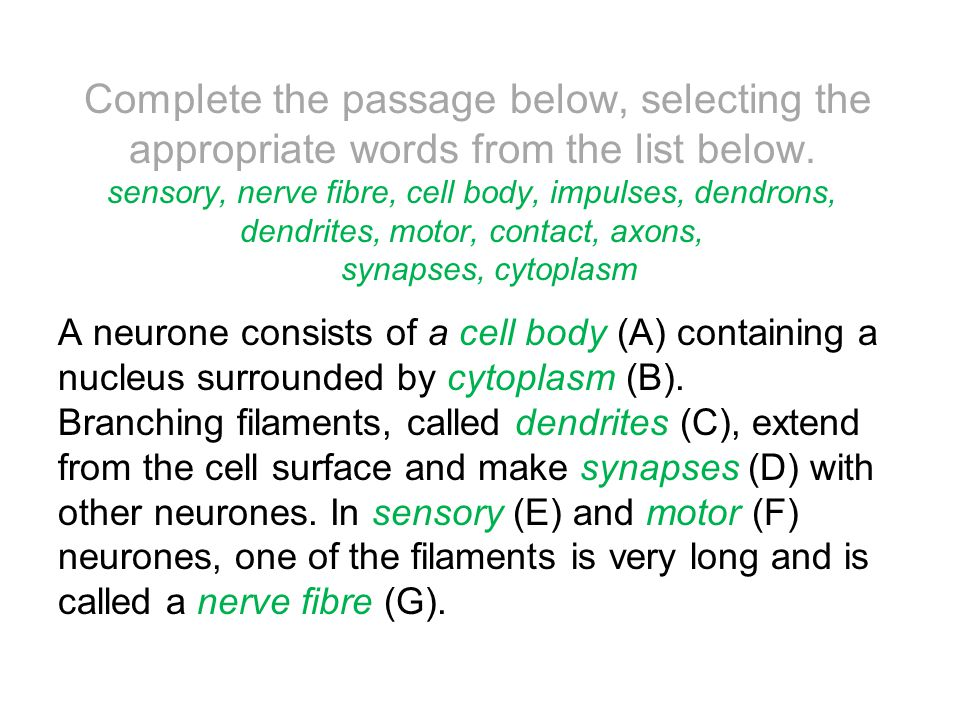 Complete the passage below, selecting the appropriate words from the list below. sensory, nerve fibre, cell body, impulses, dendrons, dendrites, motor