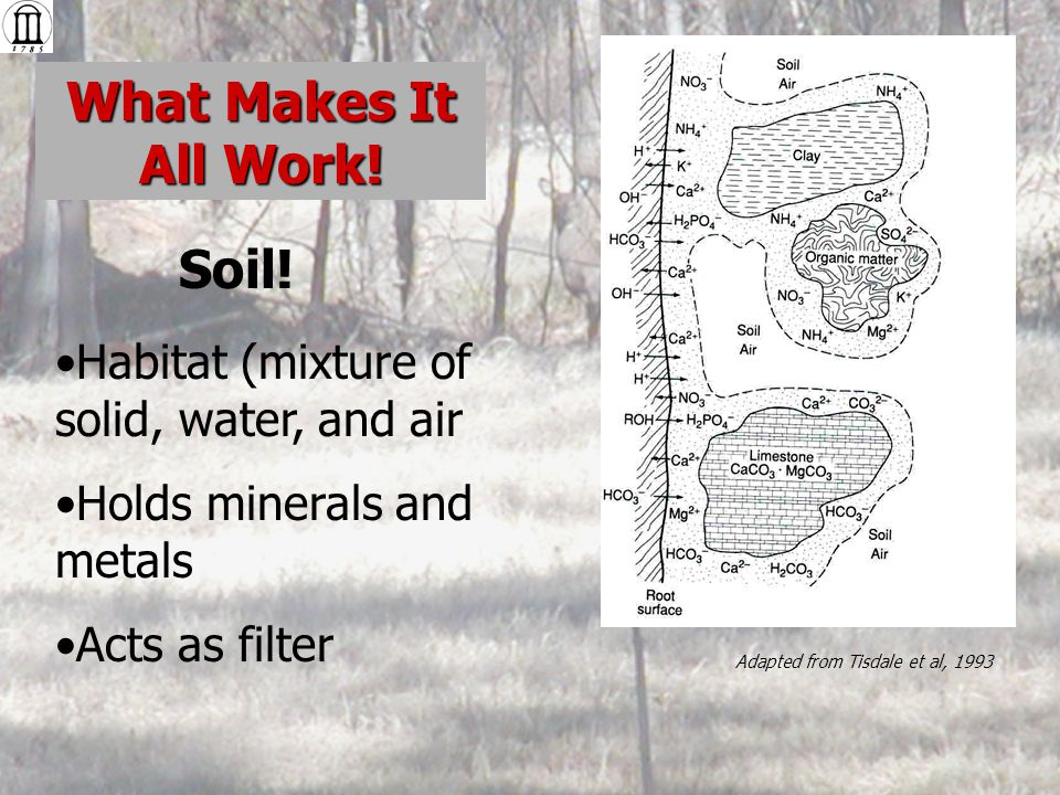 Habitat (mixture of solid, water, and air Holds minerals and metals Acts as filter What Makes It All Work.