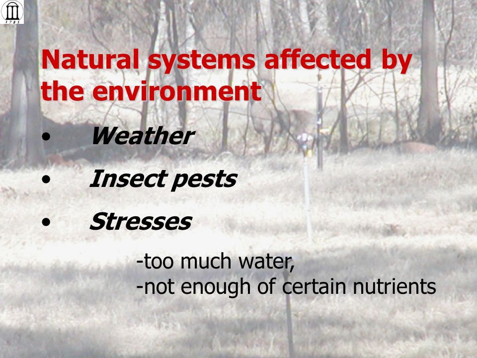 Natural systems affected by the environment Weather Insect pests Stresses -too much water, -not enough of certain nutrients