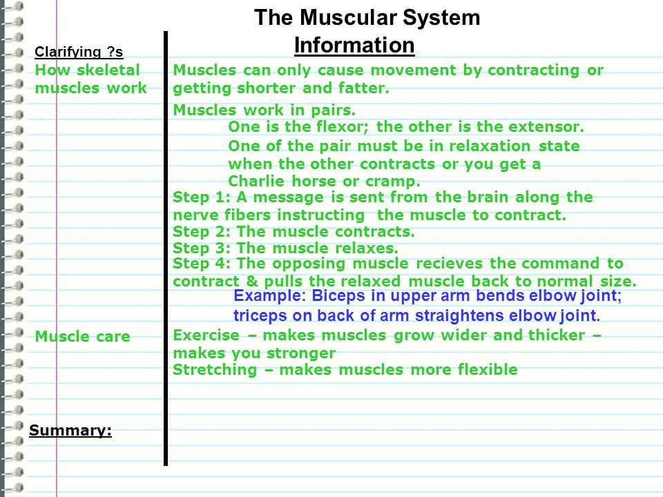 Clarifying ?s Information Summary: The Muscular System Muscles work in pairs.
