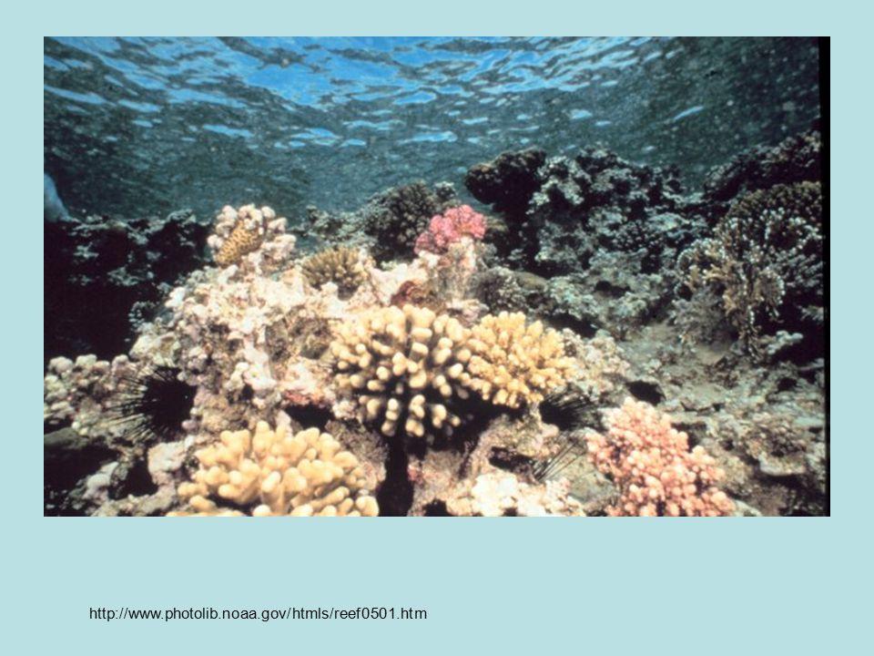 http://www.photolib.noaa.gov/htmls/reef0501.htm