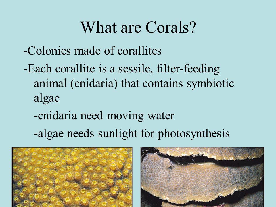 Where do Corals grow.Tropical latitudes--water temp.