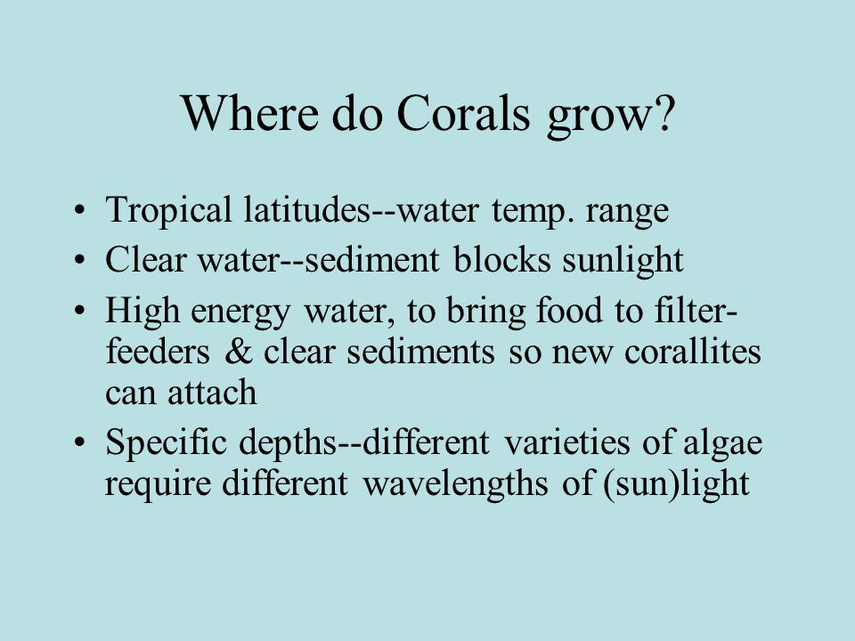 What are Coral Reefs.