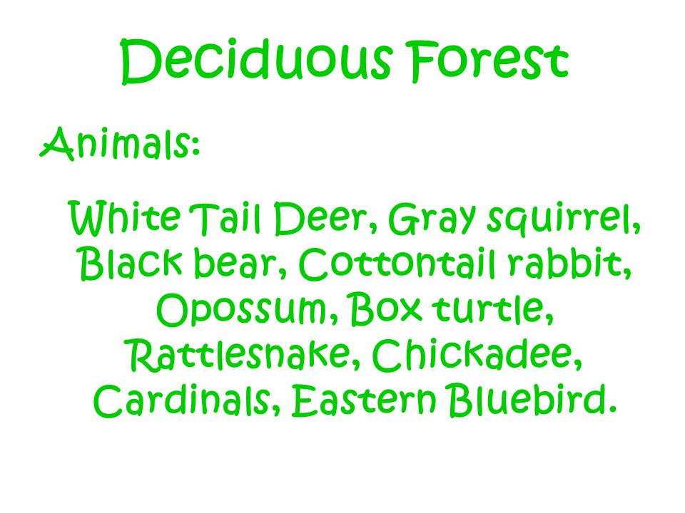 Deciduous Forest Animals: White Tail Deer, Gray squirrel, Black bear, Cottontail rabbit, Opossum, Box turtle, Rattlesnake, Chickadee, Cardinals, Eastern Bluebird.