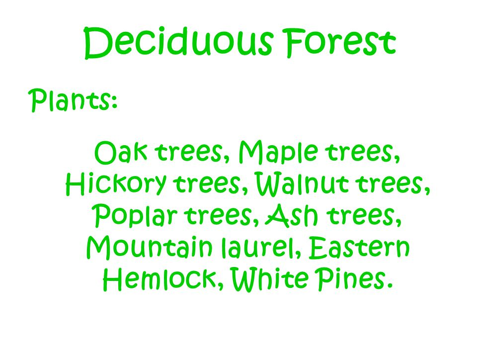 Deciduous Forest Plants: Oak trees, Maple trees, Hickory trees, Walnut trees, Poplar trees, Ash trees, Mountain laurel, Eastern Hemlock, White Pines.