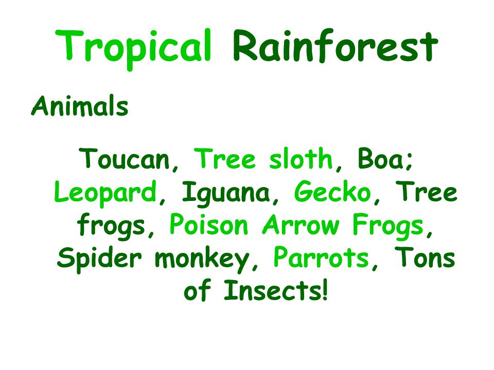 Tropical Rainforest Animals Toucan, Tree sloth, Boa; Leopard, Iguana, Gecko, Tree frogs, Poison Arrow Frogs, Spider monkey, Parrots, Tons of Insects!