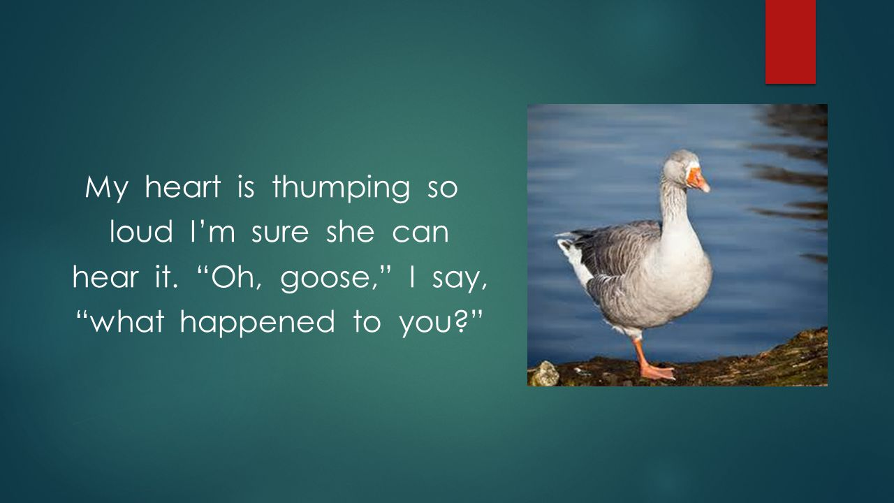 """My heart is thumping so loud I'm sure she can hear it. """"Oh, goose,"""" I say, """"what happened to you?"""""""