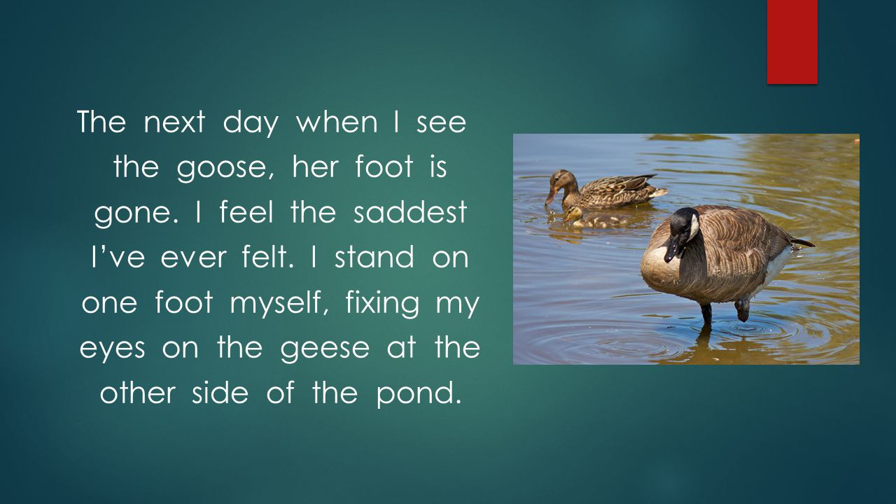 The next day when I see the goose, her foot is gone. I feel the saddest I've ever felt. I stand on one foot myself, fixing my eyes on the geese at the