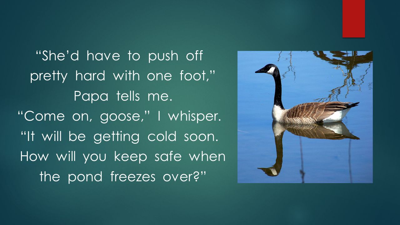 """""""She'd have to push off pretty hard with one foot,"""" Papa tells me. """"Come on, goose,"""" I whisper. """"It will be getting cold soon. How will you keep safe"""