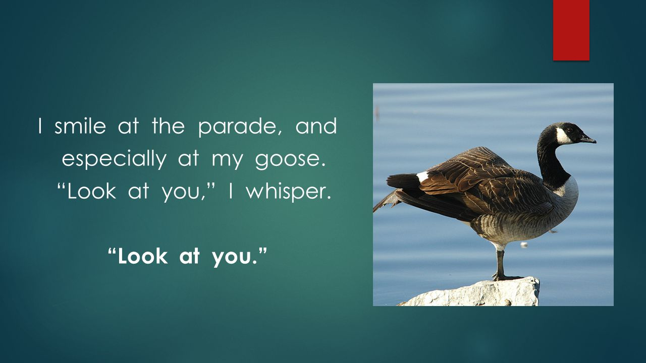 """I smile at the parade, and especially at my goose. """"Look at you,"""" I whisper. """"Look at you."""""""