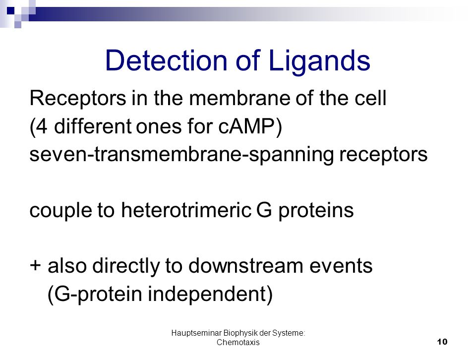 Hauptseminar Biophysik der Systeme: Chemotaxis10 Detection of Ligands Receptors in the membrane of the cell (4 different ones for cAMP) seven-transmembrane-spanning receptors couple to heterotrimeric G proteins + also directly to downstream events (G-protein independent)