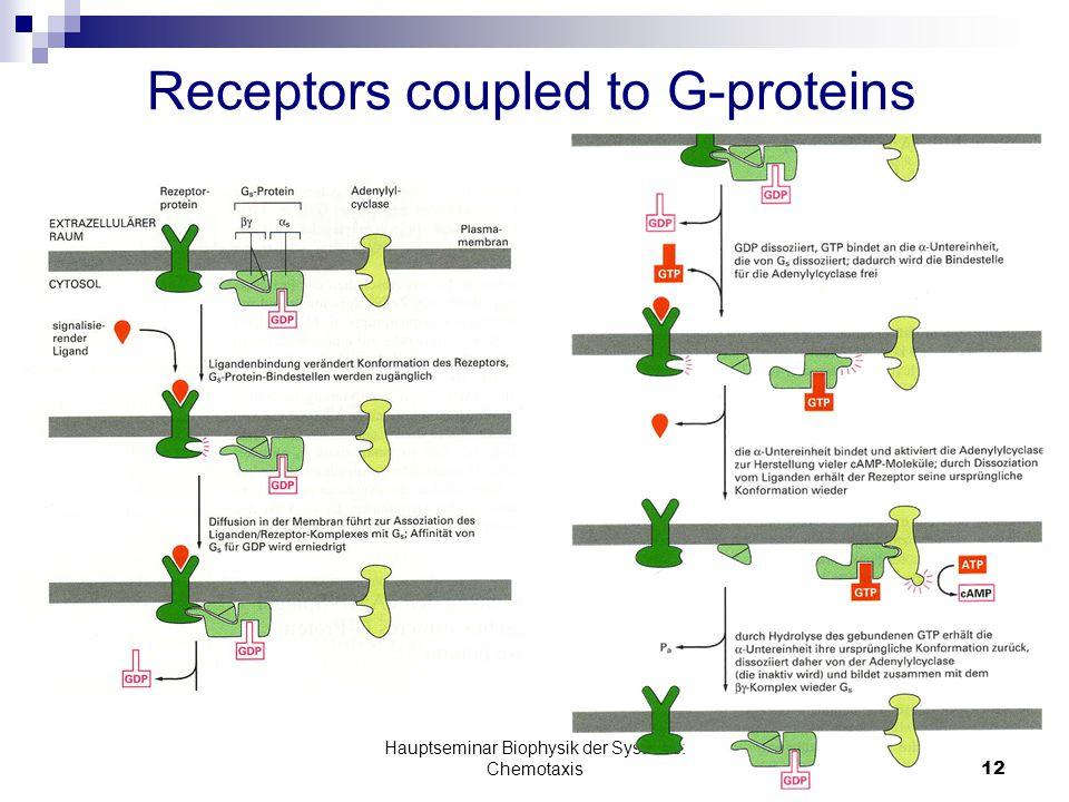 Hauptseminar Biophysik der Systeme: Chemotaxis12 Receptors coupled to G-proteins Bild