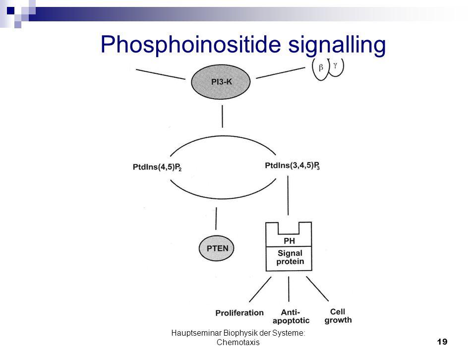 Hauptseminar Biophysik der Systeme: Chemotaxis19 Phosphoinositide signalling